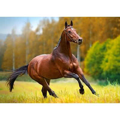 Puzzle  Castorland-018314 Pferd