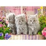 Puzzle  Castorland-030330 Drei graue Kätzchen