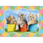Puzzle  Castorland-06762 Sibirische Kätzchen in Blumentöpfen