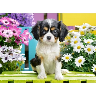 Puzzle  Castorland-070053 Spaniel Puppy in Flowers