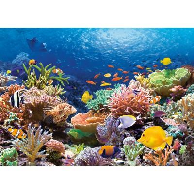 Puzzle  Castorland-101511 Korallenriff