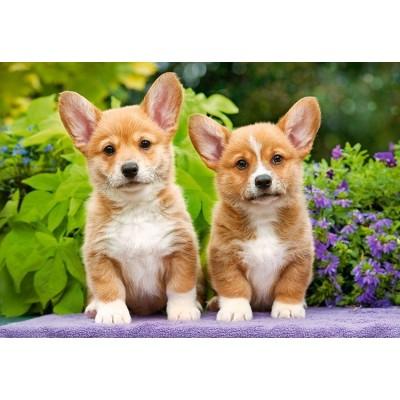 Puzzle Castorland-104659 Welsh Corgi Puppies