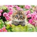 Puzzle  Castorland-111039 Kitten in Flower Garden