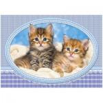 Puzzle  Castorland-13111 Kätzchen auf der Decke