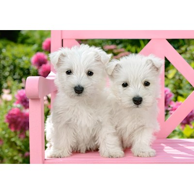 Puzzle  Castorland-151721 White Terrier Puppies