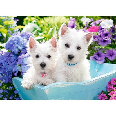 Puzzle  Castorland-222032 Westie Puppies