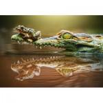 Puzzle  Castorland-52318 The Daredevil Frog