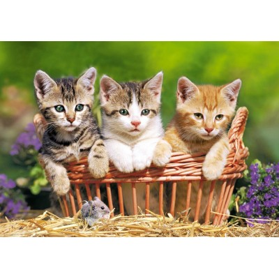 Puzzle  Castorland-52561 Kätzchen