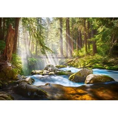 Puzzle  Castorland-52875 Forest Stream of Light