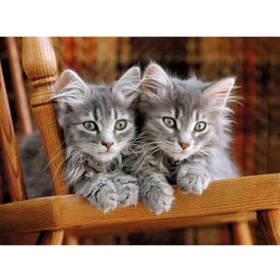 Puzzle Clementoni-30545 Graue Kätzchen auf dem Stuhl