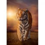 Puzzle  Clementoni-31806 Tiger