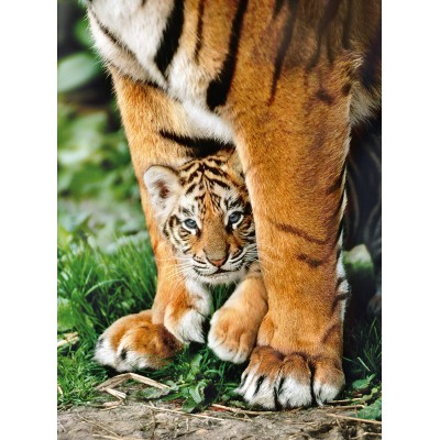 Puzzle Clementoni-35046 Bengalisches Tigerbaby