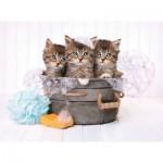 Puzzle  Clementoni-35065 Kätzchen