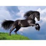 Puzzle  Clementoni-35071 Fresian Black Horse