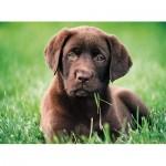 Puzzle  Clementoni-35072 Labrador Welpe