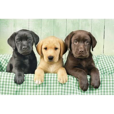 Puzzle  Clementoni-39279 Drei Labradore