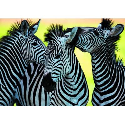 Puzzle Dino-50226 3 Zebras