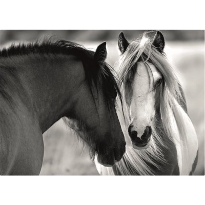 Puzzle  Dino-53261 Black and White Horses