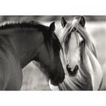 Puzzle  Dino-53261 Black and White Horses