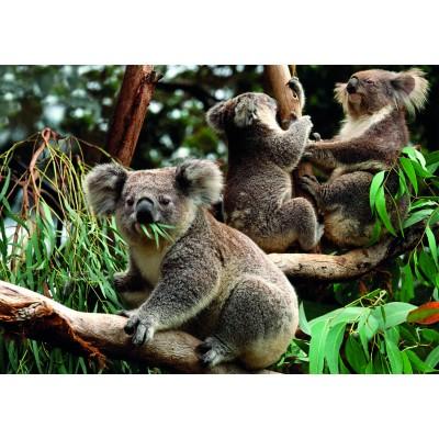 Puzzle  Dino-55152 Koalas