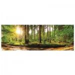 Puzzle  Dino-56206 Morgendämmerung im Wald