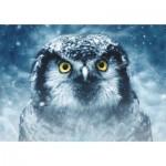 Puzzle  Deico-Games-75727 Owl