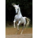 Puzzle  Dtoys-65988 Weißes Pferd