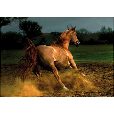 Puzzle  DToys-70388 Galoppierendes Pferd