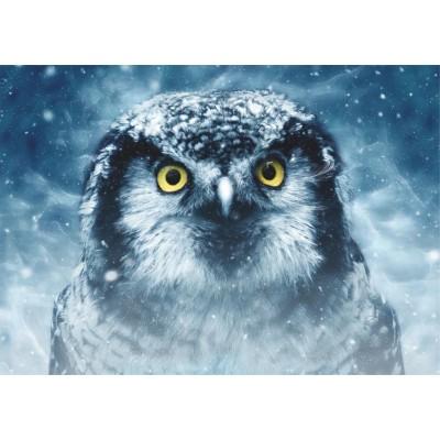 Puzzle  Dtoys-75727 Owl