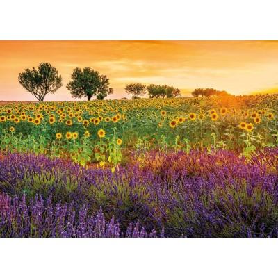 Puzzle  Educa-17669 Feld Mit Sonnenblumen und Lavendel