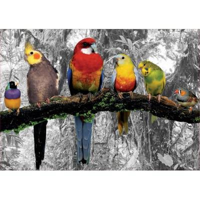 Puzzle  Educa-17984 Vögel Im Dschungel