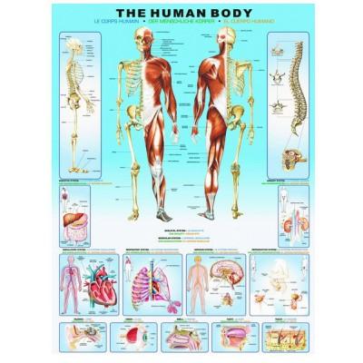 Puzzle  Eurographics-6000-1000 Der menschliche Körper