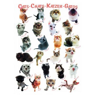 Puzzle  Eurographics-6000-1511 Klassische Katzenrassen