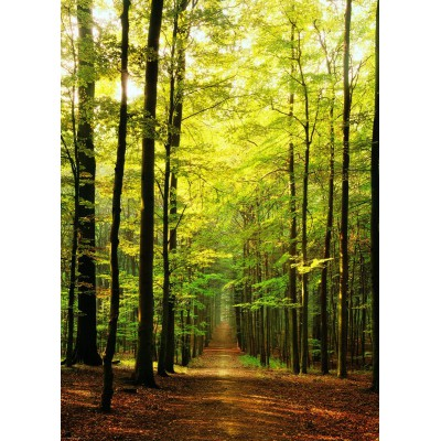 Puzzle  Eurographics-6000-3846 Im Wald