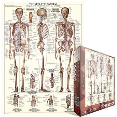 Puzzle  Eurographics-6000-3970 Das Skelettsystem