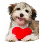 Puzzle  Eurographics-8104-0615 Hund mit Herz
