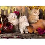 Puzzle  Grafika-Kids-00319 Persian kittens