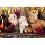 Puzzle  Grafika-Kids-00320 Persian kittens