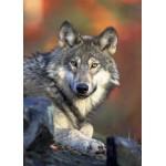 Puzzle  Grafika-Kids-00518 Magnetische Teile - Wolf
