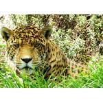 Puzzle  Grafika-Kids-00538 Magnetische Teile - Jaguar