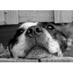 Puzzle  Grafika-Kids-00795 Hund
