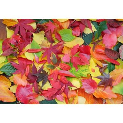 Puzzle  Grafika-Kids-01162 Herbst-Impressionen