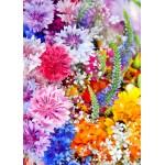 Puzzle  Grafika-Kids-01171 Magnetische Teile - Blumen-Explosion