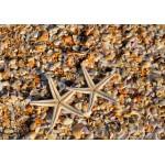 Puzzle  Grafika-Kids-01231 Muscheln und Seestern