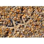 Puzzle  Grafika-Kids-01232 Magnetische Teile - Muscheln und Seestern