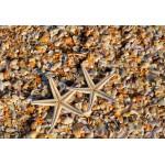 Puzzle  Grafika-Kids-01234 XXL Teile - Muscheln und Seestern