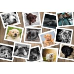 Puzzle  Grafika-Kids-01617 XXL Teile - Hunde
