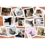 Puzzle  Grafika-Kids-01619 Katzen