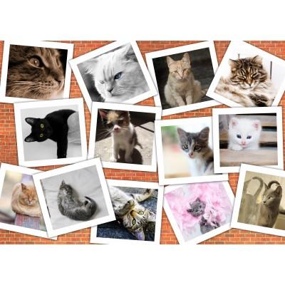 Puzzle  Grafika-Kids-01620 Magnetische Teile - Katzen