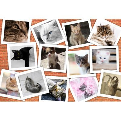 Puzzle  Grafika-Kids-01622 XXL Teile - Katzen